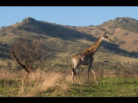 Trip: South Africa - Mozambique & Swaziland
