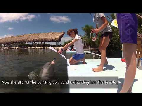 """""""Trainer for a Day"""" at the Dolphin Research Center (DRC) in Marathon, FL"""
