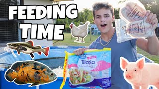 FEEDING My FISH & ANIMALS!!