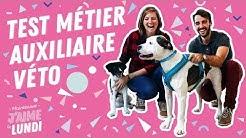 Auxiliaire vétérinaire : le salaire, les formations et le quotidien d'une assistante vétérinaire