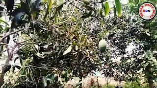 BDN NEWS:- कृषि वानिकी के द्वारा किसान बढ़ा सकते हैं आमदनी