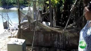 Nghề nuôi cá basa đang bị khủng hoảng