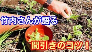 【自然菜園】竹内さんに学ぶ「間引き」のテクニック 間引きは収穫!