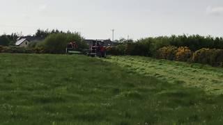 Massey Ferguson 1135 mowing silage
