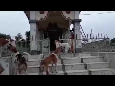 Harathi In Kalabhairava Temple Ujjain. Kala  Bhairav Temple, Ujjain. Kala Bhairav Temple History.