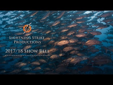 Palau:  #1 Underwater and Aerial Show Reel