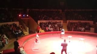 Аня в цирке