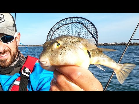 The TASTIEST Inshore Fish! PUFFERFISH! ☠️☠️ (Catch, Clean, & Cook)