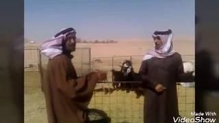 ابو حواس ومكافحة الفساد هههههههه