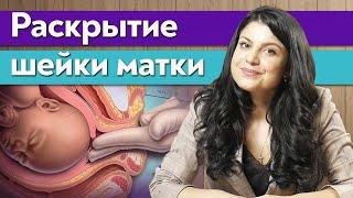 Шейка матки / Как ускорить раскрытие шейки матки при родах?