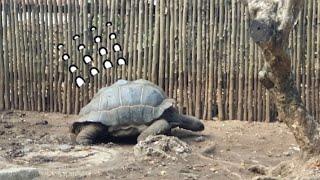 걷다 지친 거북이 tortoise tired of wa…