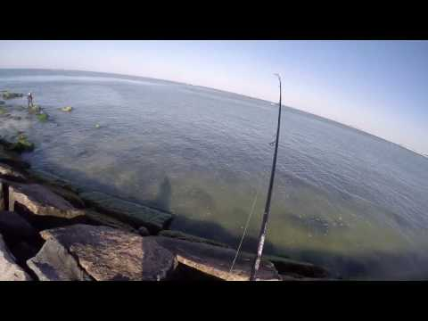 Long Island Jetty Bluefish