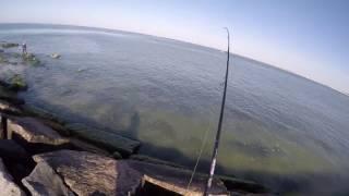 Long Island Jetty Bluefish