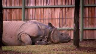 Wild Life at the Zoo Season 2 Episode 1 - Sun Bear and Indian Rhinoceros