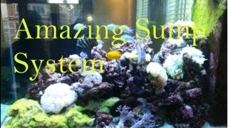 "200 Gallon ""saltwater Aquarium""  Multi Floor ""sump System"" Custom Made"