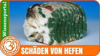 thermophile Hefen im Brot (+ Hefeexperiment) - Roman Milovanov
