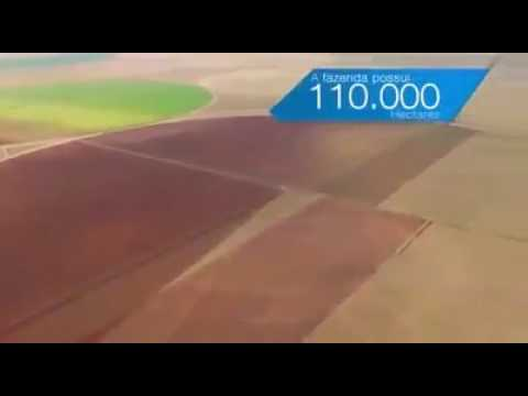 Fumo Acompanhem esse vídeo da Philip Morris, mas sao 3600 hectares
