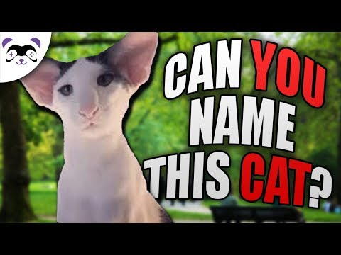 CAN YOU NAME ALL THE CAT BREEDS?