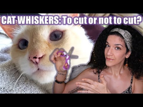 Should You TRIM Or Cut Your Cat's Whiskers? (Let's Talk KITTY WHISKERS!) 🐱🤔 Part 1 Of 2