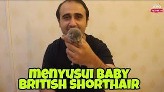 SOLUSI BAYI KUCING NGAK MAU MENYUSUI KE INDUKAN!!! FEEDING BABY CATS