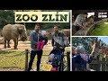Dva tátové: Krmení rejnoků a setkámi z očí do očí se žirafami