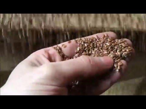 Производство льняного и технического масла, льняной муки