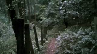 There was something following me!!! Supernatural desuka Lost in a Haunted Japanese forest.