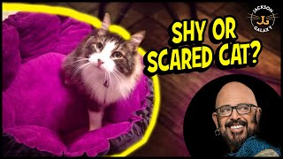 THE Key to Helping Your Shy or Scared Cat