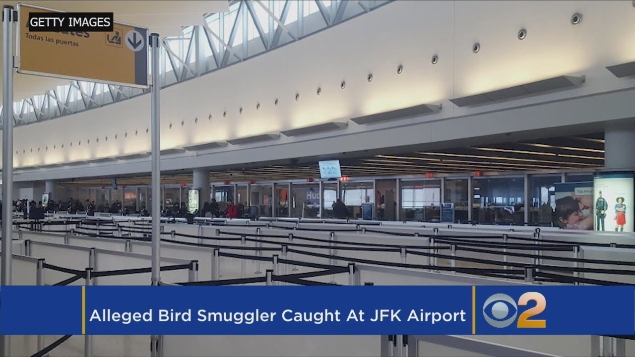 Customs: Bird Smuggler Caught At JFK With Bag Full Of Finches