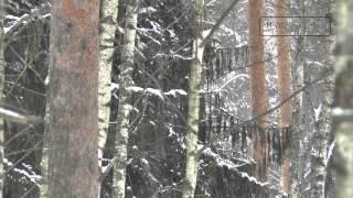 Охрана природы(, 2015-03-04T13:34:10.000Z)