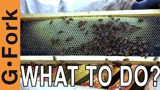 Honey Harvest Problem, Uncapped Honey Frames? | Beginning Beekeeping | GardenFork