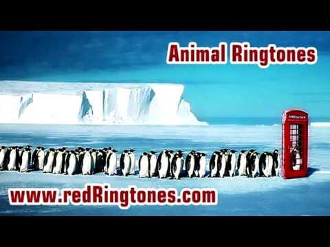 Animal Ringtones Free Ringtone Downloads for Android an iPhone