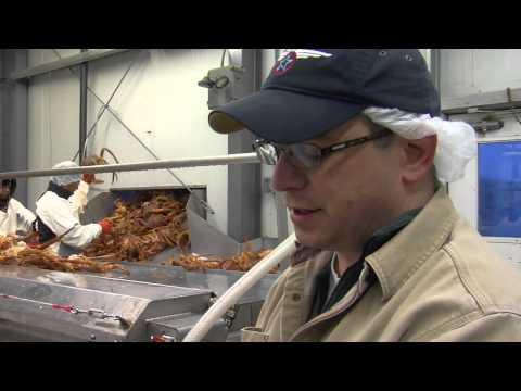 Bering Fisheries  King Crab, Opilio, Cod