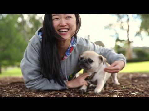Donut the Pug x Lhasa Apso | Ragamuffin Pet Photography