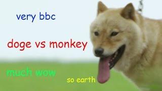 Doge Vs Monkey In Japan  - Wild Japan - BBC thumbnail