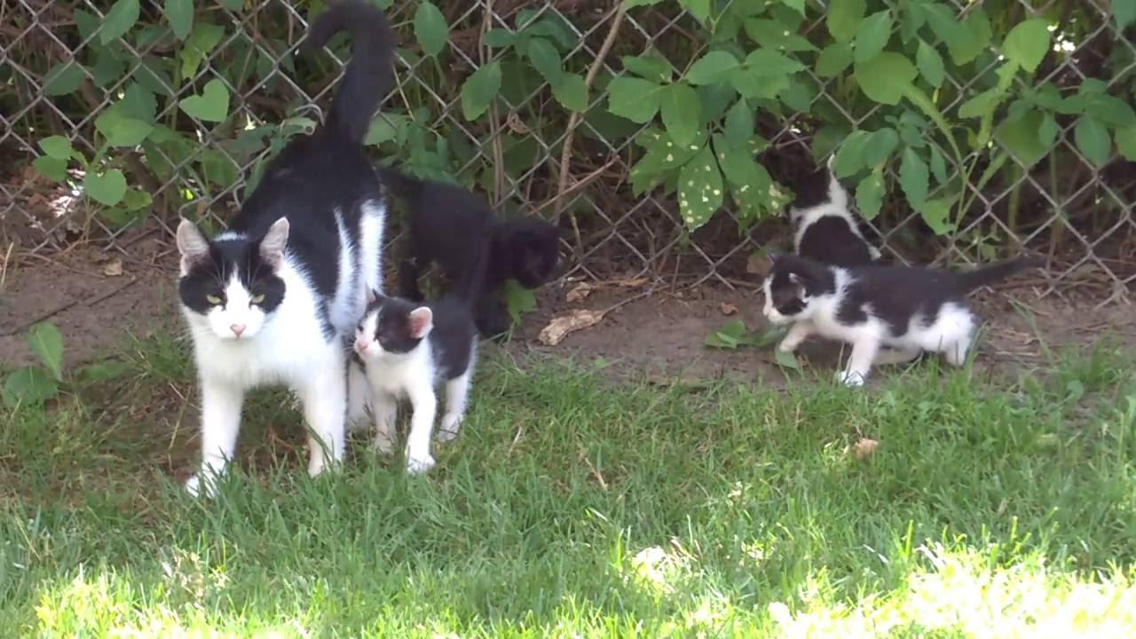 Cat In Backyard kittens in the backyard - youtube