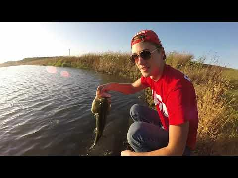 POND Fishing For Some MONDO BASS From The Bank! (Fall Bass Fishing)