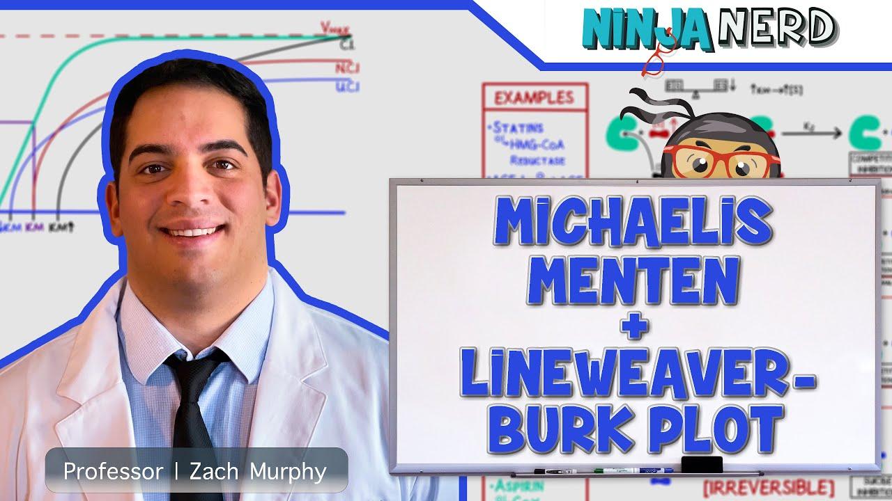 Download Biochemistry   Michaelis Menten & Lineweaver-Burk Plot