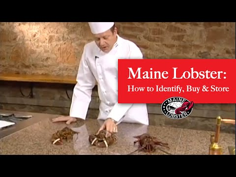 How to Identify, Buy and Store Authentic Maine Lobster