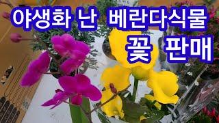 야생화판매 거실실내식물 아파트베란다정원  플랜테리어식물…