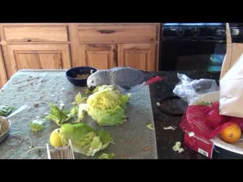 Cleo and Willow Tear Up a Head of Lettuce