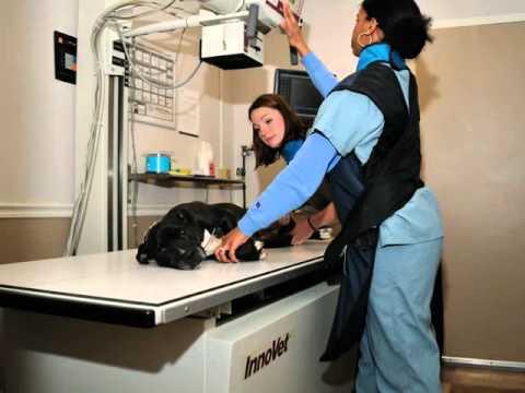 Andorra Veterinary Clinic - Lafayette Hill, PA