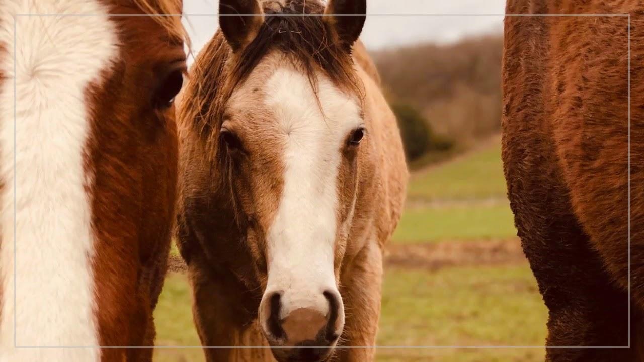 Cours-pension-vente-élevage-coaching  équitation western