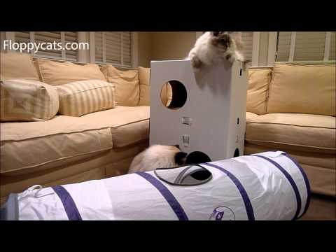 Large Cat Tunnel: Pets Can Play Ultimate Cat Tunnel Product Review - ねこ - ラグドール - Floppycats