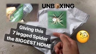 I FINALLY got JUMPING SPIDERS !!! (..well kinda) ~ I guess my Rabbits don't like Spiders.