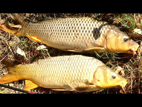 Best carp fishing