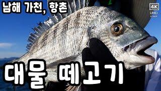 남해 가천 항촌 갯바위 대물감성돔 시즌이 시작되다. 감…