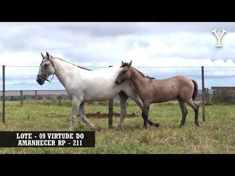 LOTE   09 VIRTUDE DO AMANHECER RP   211