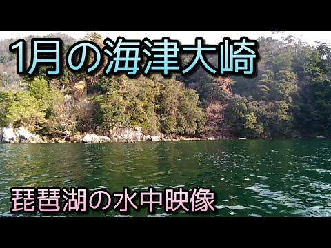 #琵琶湖 #水中映像  1月の海津大崎