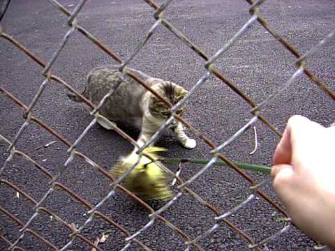 Stupid Cat Video